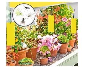 """10 י""""ח מדבקה צהובה ללכידת חרקים באדניות"""